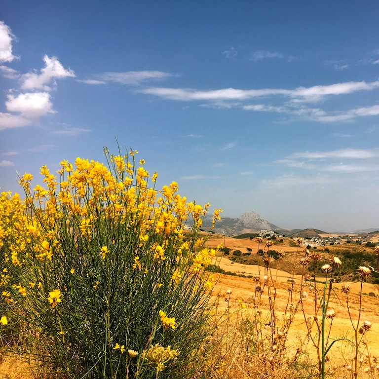 Zomer in Andalusië