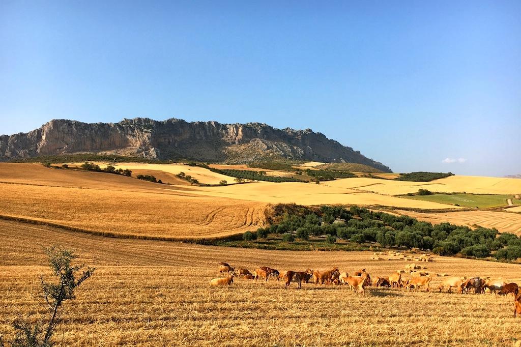Het Torcal plateau rijst op uit de vlakte