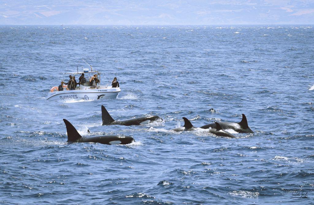 Turmares walvis spotten straat van Gibraltar