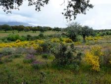 dehesa in de buurt van het Gabriel y Galán Reservoir