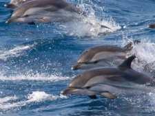 Dolfijnen bij Tarifa