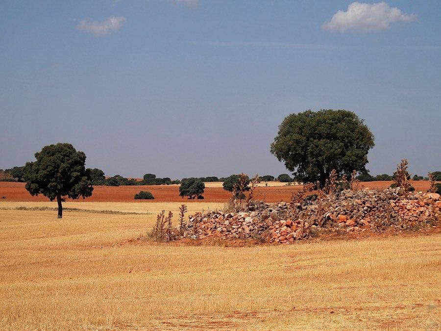2009 Landschap
