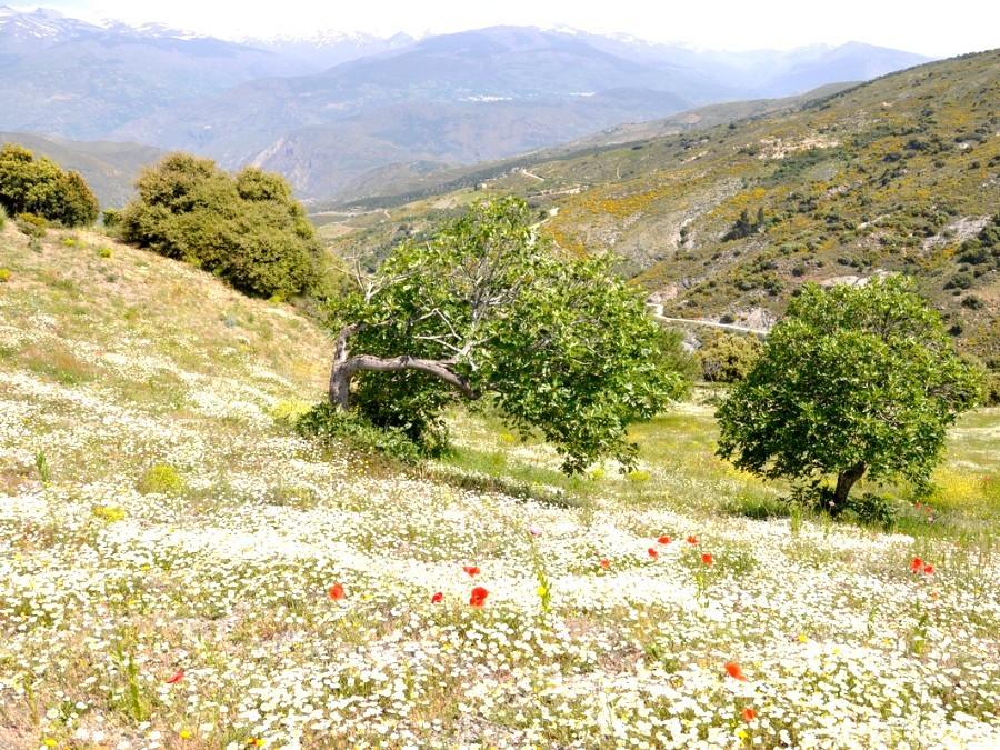 Voorjaar in Andalusië