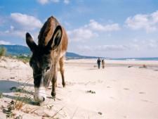 Het strand van Bolonia