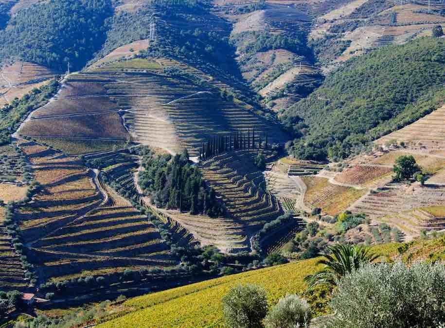 Wijngaarden van de Douro