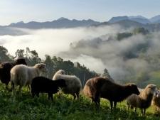 Asturie, onderweg...
