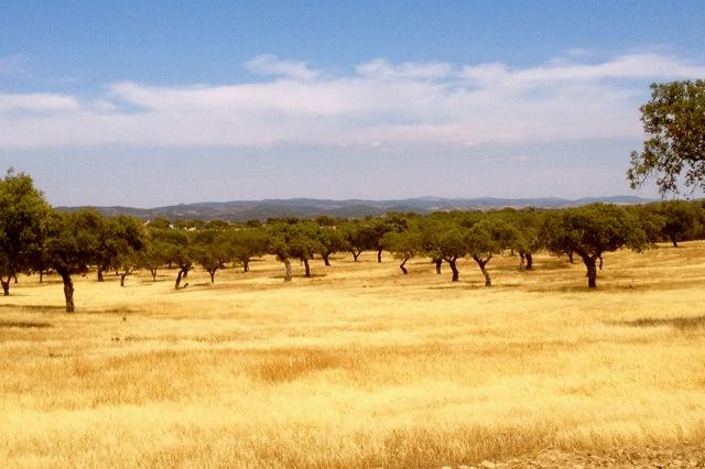 het uitgestrekte landschap van de Alentejo