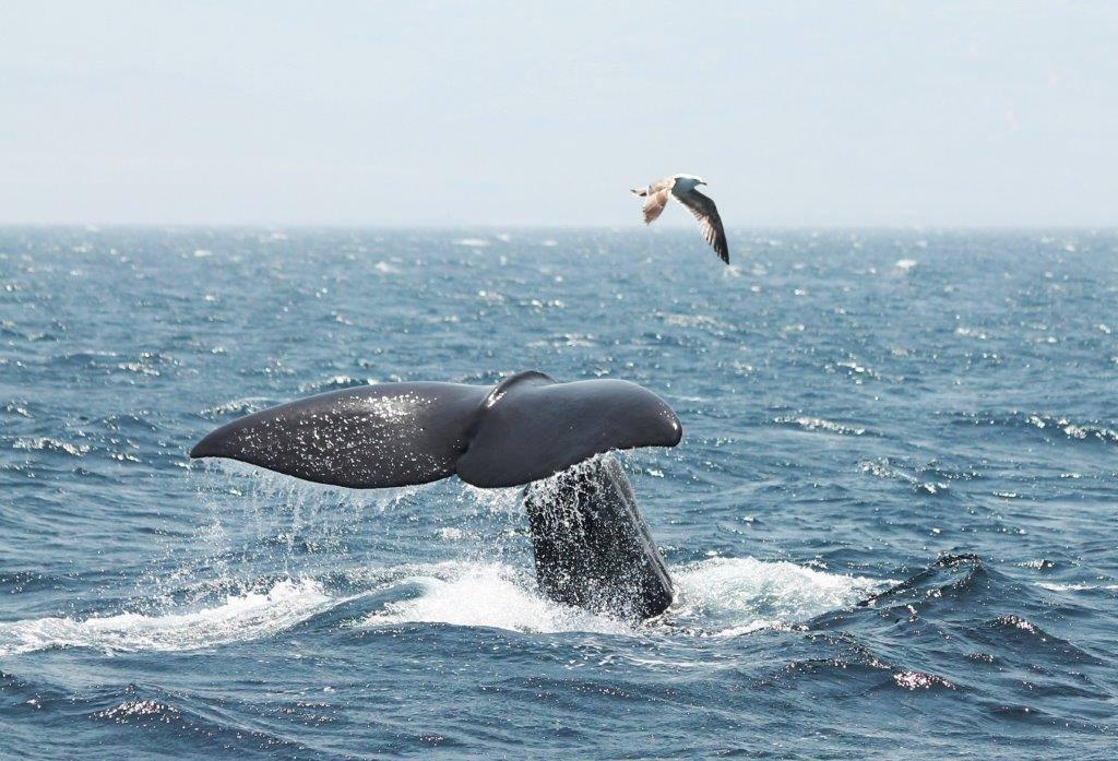 Walvis & Dolfijnexcursie bij Tarifa