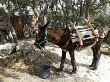 Een van de ezels