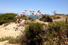 De duinen bij Cabo de Trafalgar, Caños de Meca