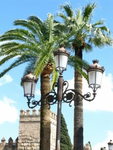 Palmbomen in Sevilla