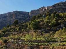 DO Montsant wijngaarden bij Cornudella