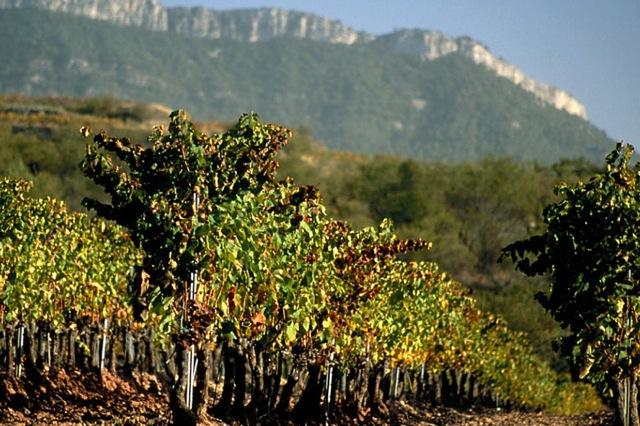 Wijngaarden bij de Sierra de Llaberia