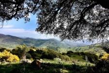 De Alcornocales in Andalusië