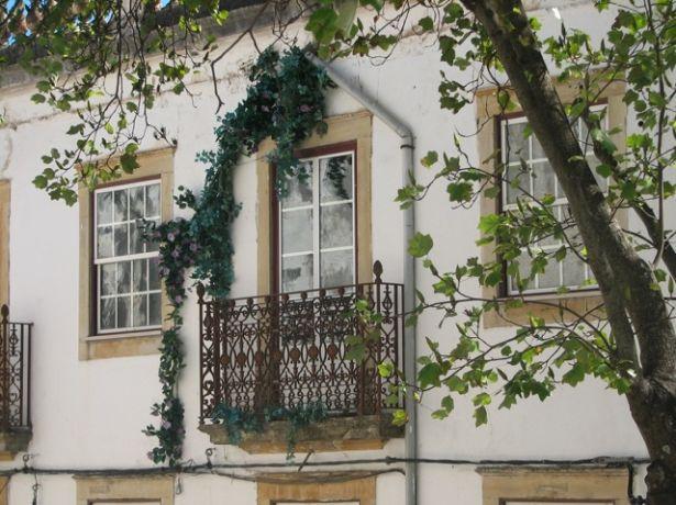 Coimbraraam