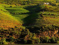 Wijngaarden in de Douro vallei