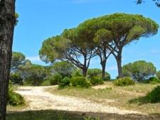 Vejer - Parque Natural de Barbate (1)