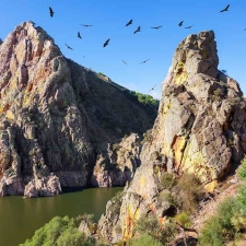50581066 - mirador del salto del gitano in monfragüe national park. nest of a colony of black vultures over tagus river. province of caceres, spain