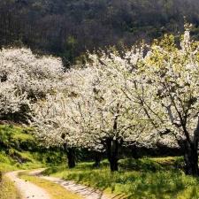Voorjaar in de Valle de Jerte