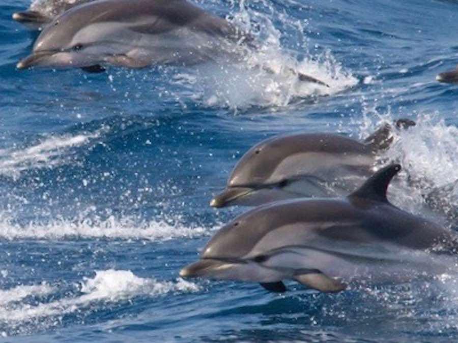 dolfijnen dolfijnexcursie bij Tarifa