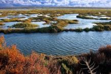 Ria Formosa moerasland