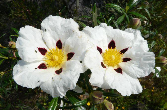 Flores_0