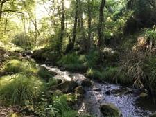 reis-cadiz-rivier-bos-wandelen