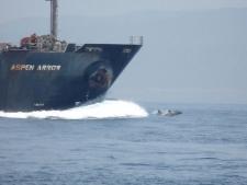 Whale watching bij Tarifa