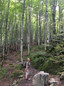 Willem in de Selva de Irati