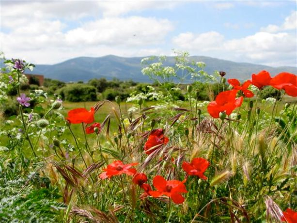 Landschap Segovia